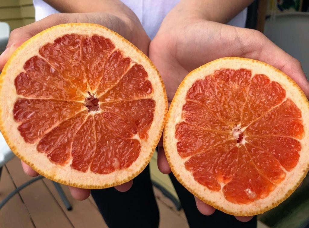 Child holding grapefruit cut in half