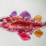 rainbow cod