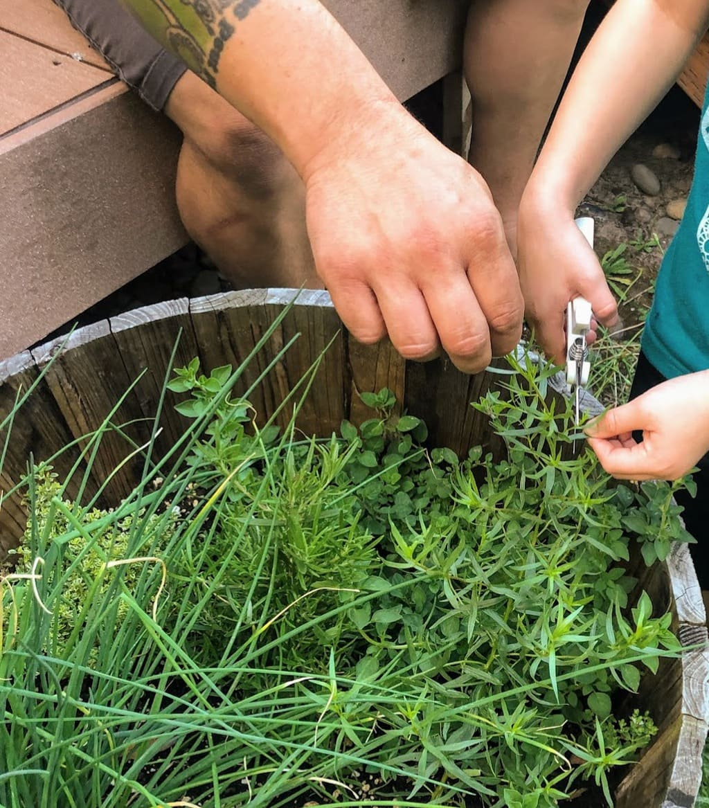 Snipping rosemary for chicken and squash recipe